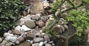 flot have med sten sommer